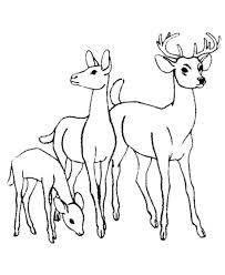 75 wild game pics images drawings coloring