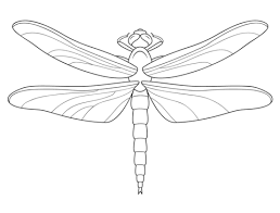 symmetry coloring pages dragonfly coloring pages free coloring pages