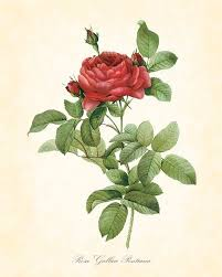 360 best vintage rose prints images on pinterest flowers