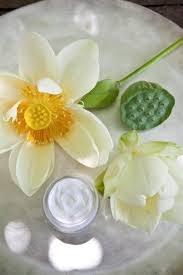 Fresh Cut Flower Preservative by 81 Best Lotus Images On Pinterest Flowers Plants And Lotus