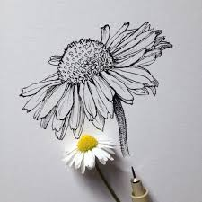 Flower Drawings Black And White - best 25 daisy drawing ideas on pinterest daisy art pen