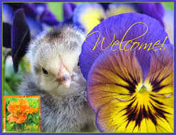 Backyard Chicken Blog by The Chicken Clever Blog Hop 80 Featuring The