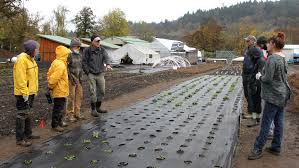 oregon native plant nursery in the moment ecological restoration