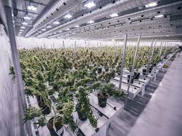 canopy growth gave the marijuana industry its first u0027unicorn