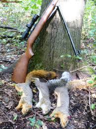 where u0027s a good place to hunt squirrel in s e mi michigan