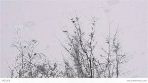 motion birds flying away in winter stock footage 3421268