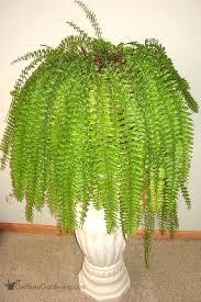 low light indoor trees low light indoor plants that are easy to grow houseplants low light