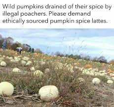 Pumpkin Spice Meme - pumpkin spice meme my favorite daily things