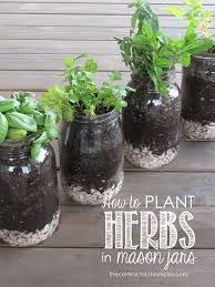 Easy Herbs To Grow Inside How To Plant Herbs In Mason Jars The Contractor Chronicles Such