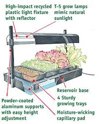indoor herb growing kits grow your own healthy organic herbs at home