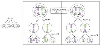 Linkage Map Genetic Linkage U0026 Mapping Article Khan Academy