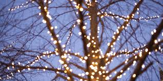 lights should you hang them on your trees and shrubs