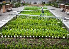 herbs garden gardening ideas