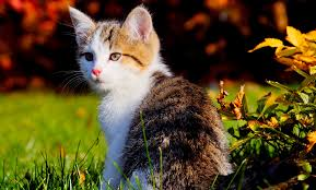 30 innocent and cute cat pictures themescompany