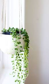 Easy Care Indoor Plants 29 Most Beautiful Houseplants You Never Knew About Drought