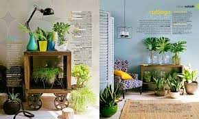 daily imprint interviews on creative living indoor plants can
