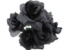 black flower 10 real black flowers high resolution wallpapers