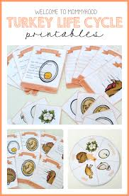 welcome to mommyhood turkey cycle printables and activities