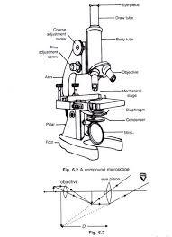 sketches for compound microscope sketch www sketchesxo com