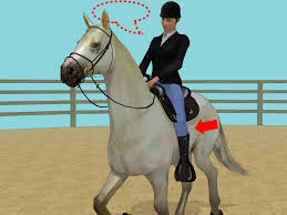 horse saddle how to start a horse under saddle 15 steps with pictures