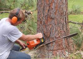 tree services pasadena home