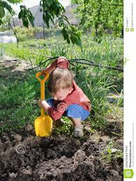 little boy planting vegetables stock image image 34469827