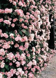 25 marvelous flower walls flower wall flower and walls