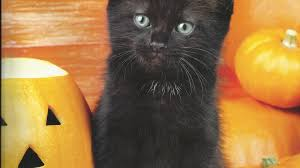 halloween kitten wallpaper 1366x768 wallpapers page 1930 spring dog animal nature cute