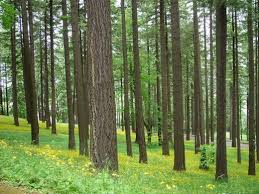 seeing the wood for the trees interactive climate analysis for