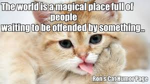 Sarcastic Cat Meme - ron s sarcasm cat corner home facebook