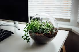 plant on desk a desk garden for office plants and indoor gardening gardensall