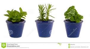 Window Box For Herbs Selection Of Three Herbs Mint Rosemary And Parsley In Small Blue