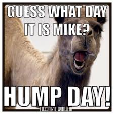 Hump Day Camel Meme - hump day commercial hump day camel this one s for you dawn