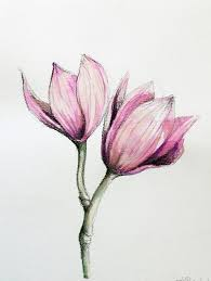 realistic drawings of flowers in color drawing flowers images color
