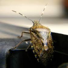 was ist das für ein insekt eine wanze oder was urlaub insekten the s best photos of insekt and wanze flickr hive mind