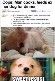Pomeranian Meme - pomeranian memes best collection of funny pomeranian pictures