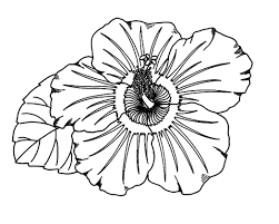 fresh hibiscus coloring page 94 for your line drawings with