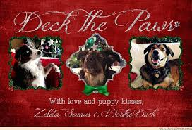 christmas cards with pets christmas lights card and decore
