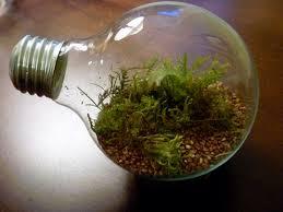How To Make A Light Bulb Best 25 Light Bulb Terrarium Ideas On Pinterest Light Bulb