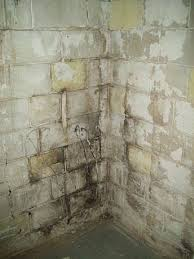 alluring mold on basement walls cinder block how to get rid of