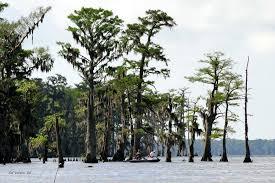 Louisiana scenery images Scenery 3 louisiana department of wildlife and fisheries jpg