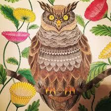 12 Best Millie Marotta Conejos Images On Pinterest Adult Owl Coloring Ideas