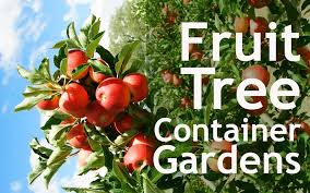 Container Gardening For Food - how to grow fruit trees in your indoor container garden nourish