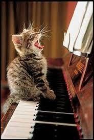pin ikuko yamazaki cats cat animal kitty