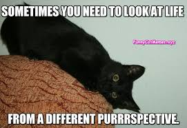 Different Meme - looking at life from a different purrspective funny cat meme