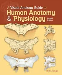 Principles Of Anatomy And Physiology 13th Edition Tortora Principles Of Anatomy And Physiology Edition 13 By Gerard J