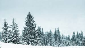 beautiful winter landscape with snow covered trees stock footage
