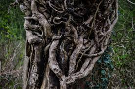 dead oak dead daniel greenwood