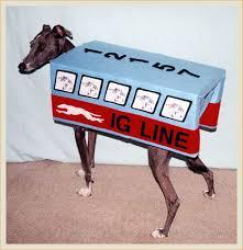 Italian Halloween Costume Italian Greyhound Bus Costume