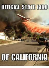 California Meme - official state bird of california mematicnet california meme on